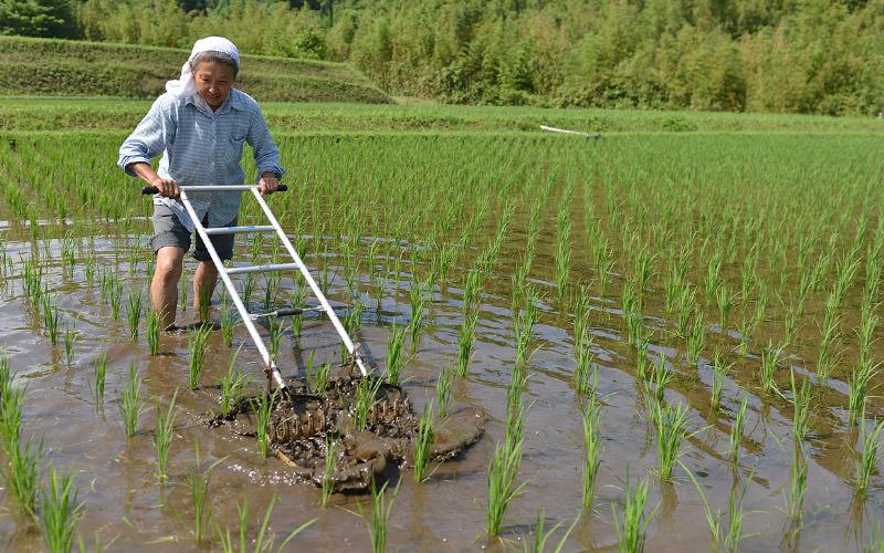 押さえつけて前後しながら除草する
