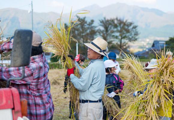 刈り取った稲はコンバインにかけて脱穀するが、実際にコンバインに稲をかける作業は危険なので井芹さんら大人が行う。子どもたちは刈り取った稲を集めて運んでくる係。