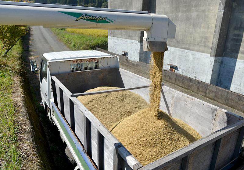 トラックの荷台に籾を移していく。今年は全体的に収量が低めだが、井芹さんとこは例年通りくらいは取れそうだ。