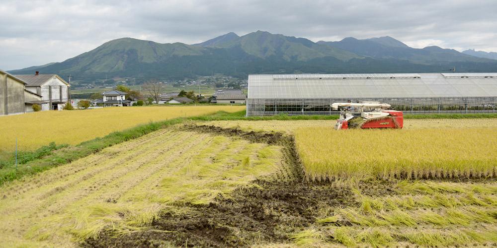 井芹さんの稲刈りの様子。