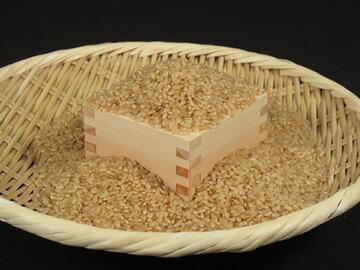 ざるに盛った玄米