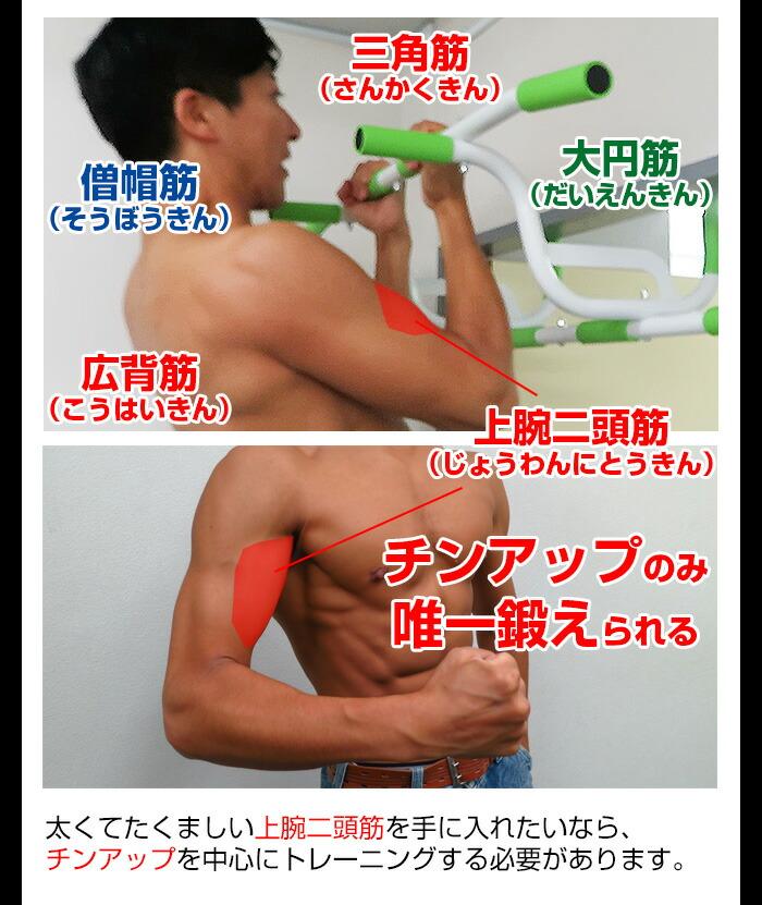 チンアップで鍛えられる筋肉