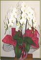 胡蝶蘭 3本立ち白