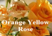 オレンジバラ 黄色バラ ブーケ 花束