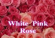 ピンクバラ 白バラ ホワイトローズ ブーケ 花束