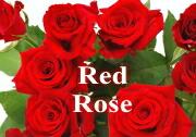 レッドローズ・赤バラの ブーケ・花束