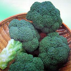 broccoli011.jpg