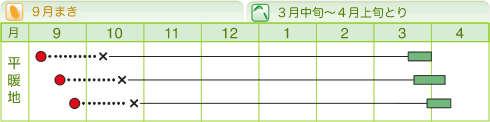 okumidori99w02.jpg