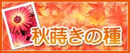 秋まきの種