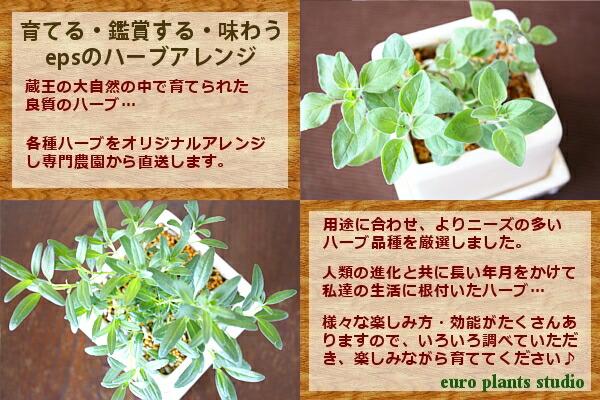 育成・鑑賞・味わい/3拍子揃ったハーブアレンジ