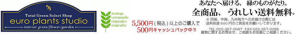 Total Green Select Shop euro plants studio トータル・グリーン・セレクト・ショップ ユーロプランツ