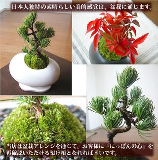 モダン盆栽『eco-bonn』