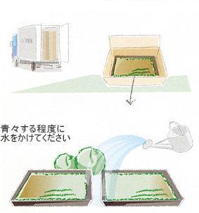 植栽の手引き 苔1