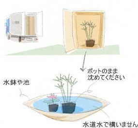 植栽の手引き 水生植物1