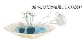 植栽の手引き 水生植物3