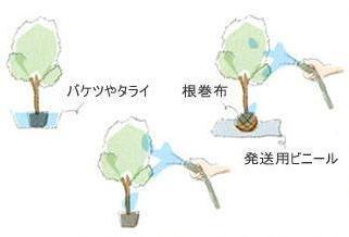 植栽の手引き 植木2