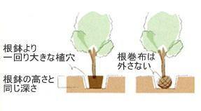 植栽の手引き 植木3