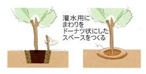 植栽の手引き 植木5