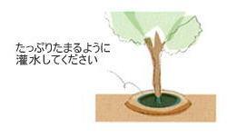 植栽の手引き 植木7