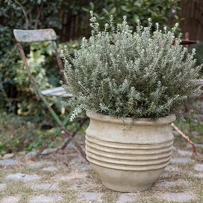 プランター 植木鉢 テラコッタ アンティーク調ポット テラアストラ リゲル