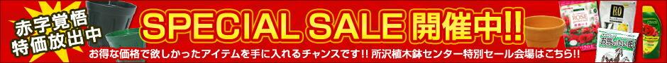 赤字覚悟特価放出!! SPECIAL SALE開催中!!