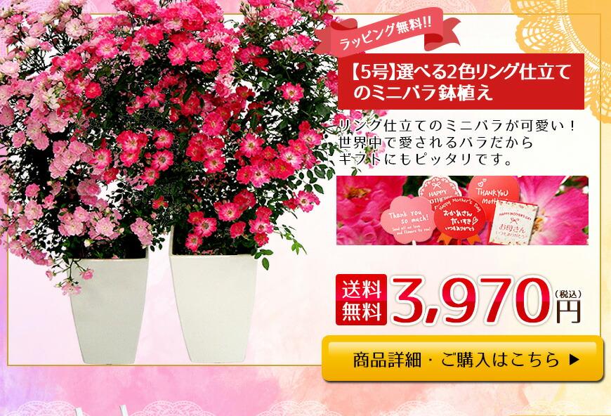 母の日ミニ薔薇