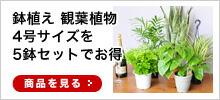 観葉植物5株セット
