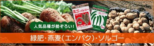 緑肥・燕麦・ソルゴー