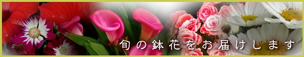 季節の鉢花