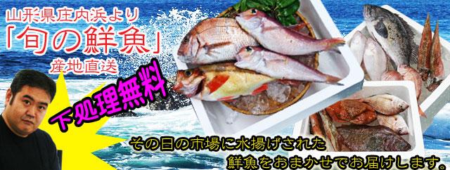 山形県庄内浜より旬の鮮魚をお届け