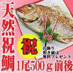 祝い鯛500g