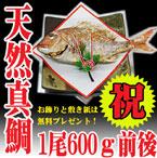祝い鯛600g