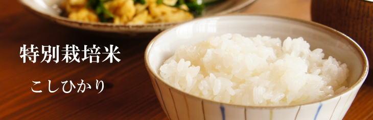 御牧原 特別栽培米