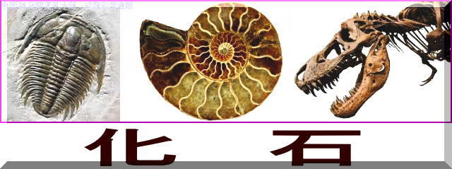 化石・カセキ