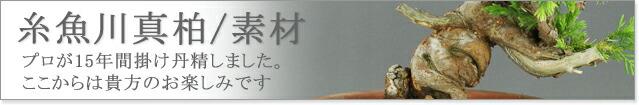 糸魚川真柏素材