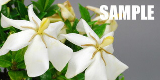 花のサンプル