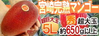 宮崎マンゴー5Lパック