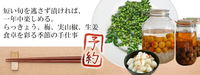 梅らっきょう生姜