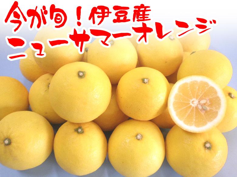 伊豆産ニューサマーオレンジ