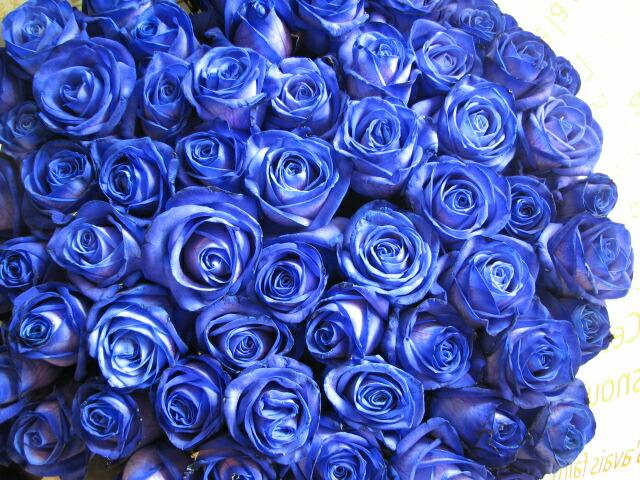 青バラ 100本 花束