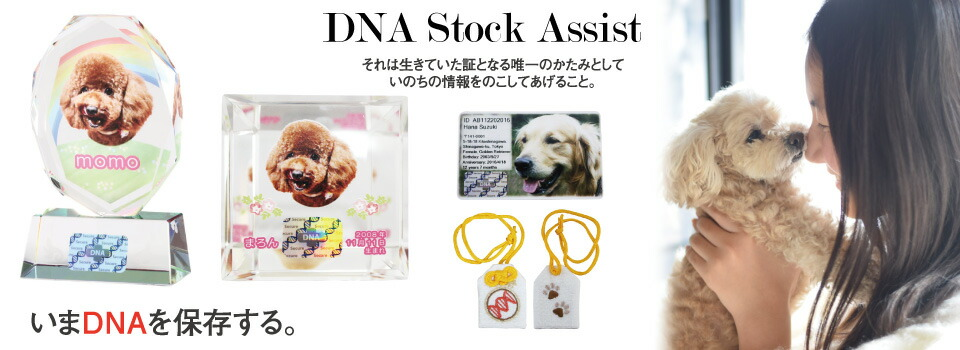 DNA Stock Assist