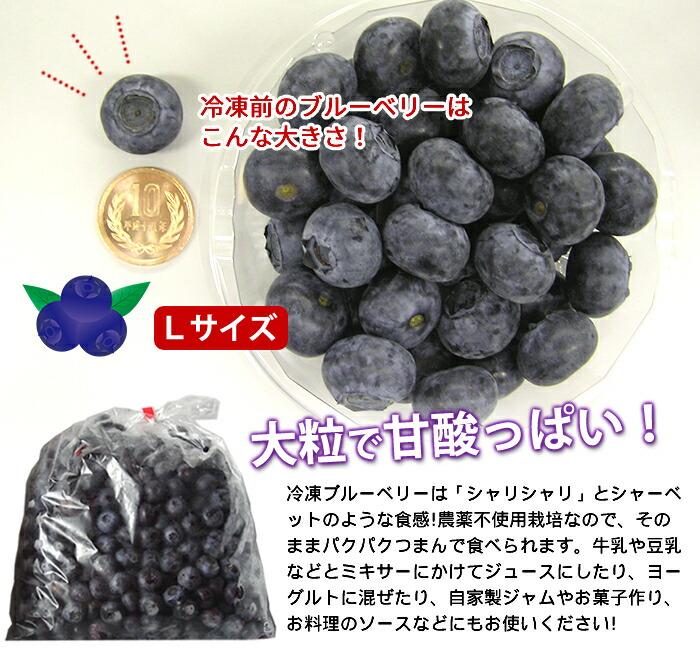 【Lサイズ】は1粒16~20mmほど!大粒で甘酸っぱいブルーベリー♪