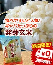 発芽玄米穂の華