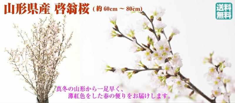 山形県産 啓翁桜