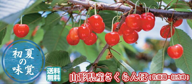 山形県産さくらんぼ(佐藤錦・紅秀峰)