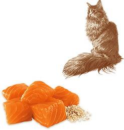 ニュートロ ナチュラルチョイス キャット 室内猫用 アダルト サーモン
