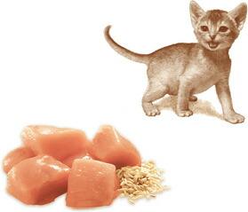 ニュートロ ナチュラルチョイス キャット 室内猫用 キトン チキン