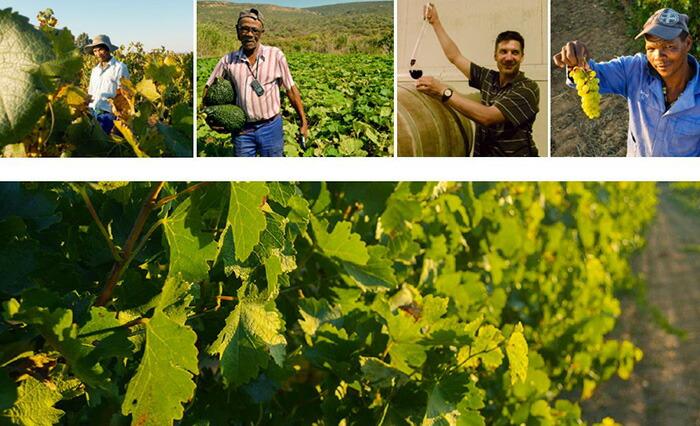 人と自然に優しいワイン