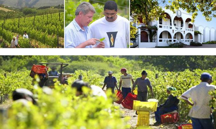 自然に優しいワイン造り