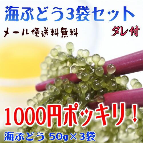 【1000円ポッキリ】